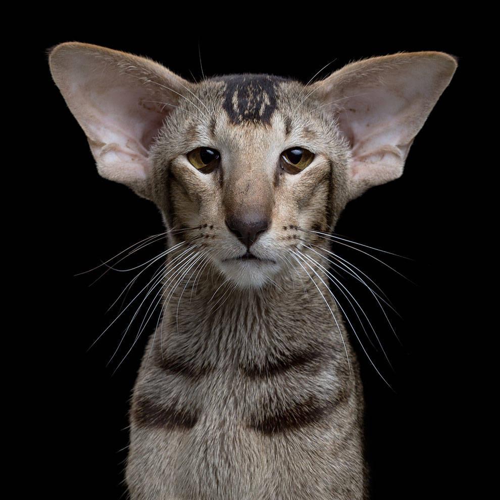 pisici17