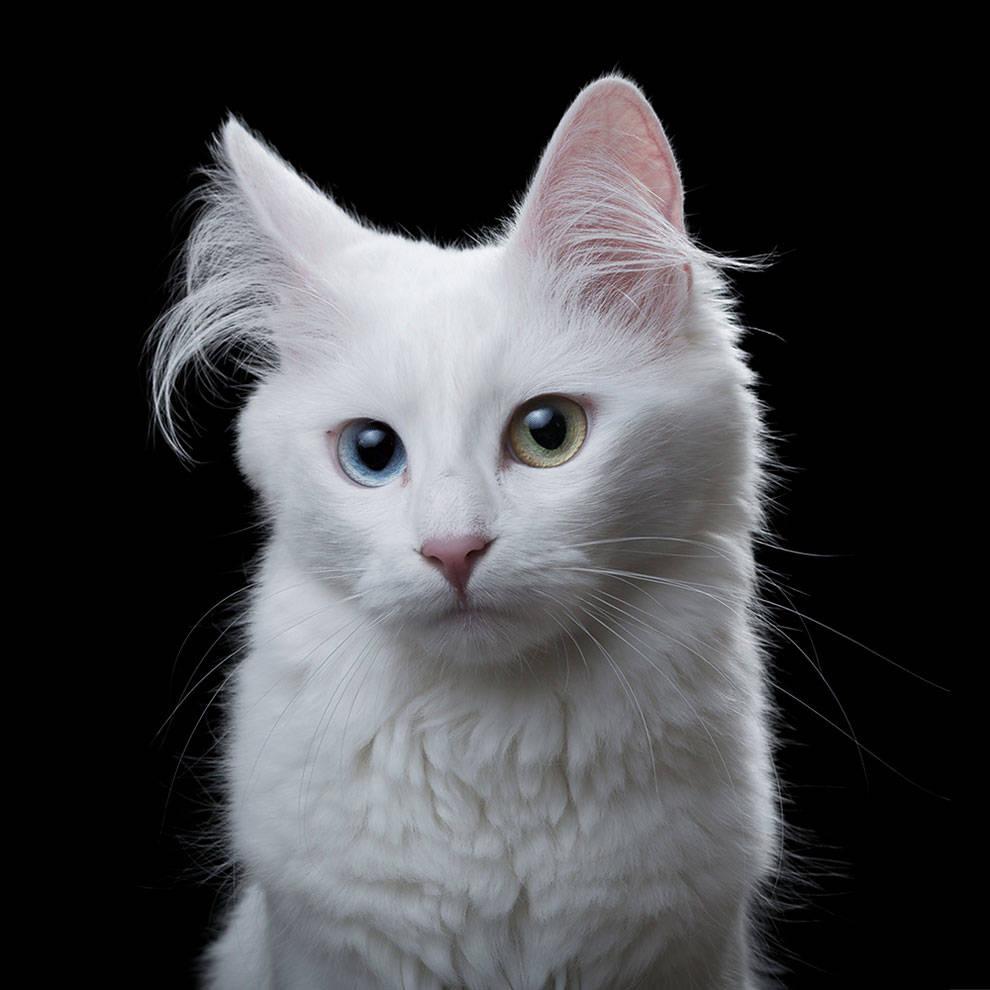 pisici3