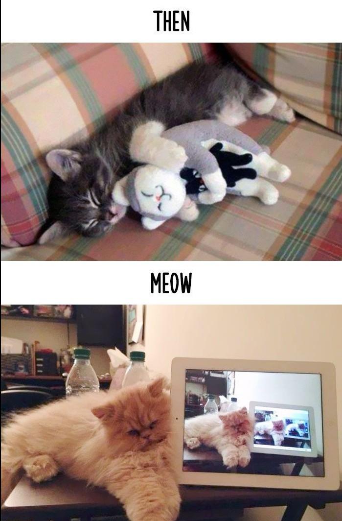 pisici10