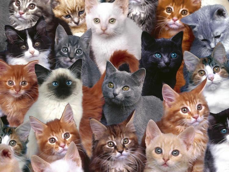 pui de pisici cu motani diferiti